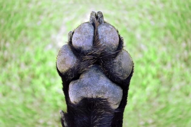 Mon chien se lèche tout le temps les pattes : pourquoi, et est-ce normal ?