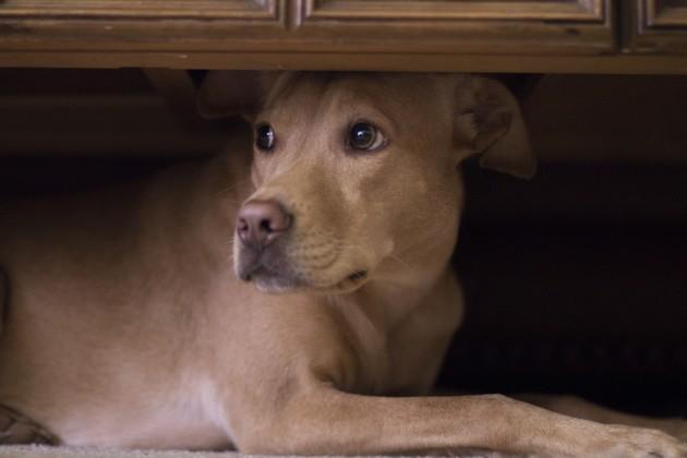 Mon chien ou chat a peur de l'orage : comment faire pour le calmer ?