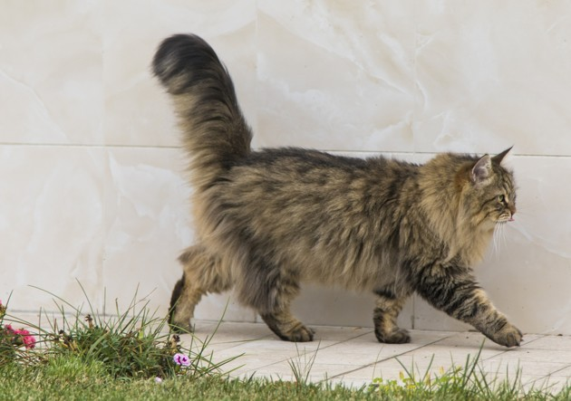 Que faire en cas d'allergie au chat… quand on a déjà un chat ?