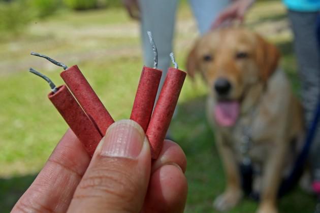 chien avec des feux d'artifice