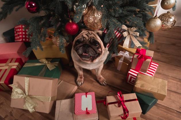 chien entouré de cadeaux de Noël sous le sapin