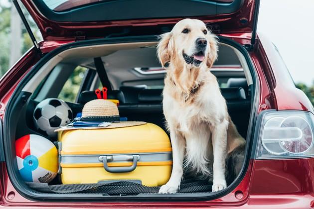 Quoi mettre dans la valise de son petit compagnon avant de partir en vacances ?
