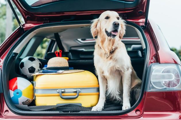 5 conseils pour bien voyager en voiture avec son chien