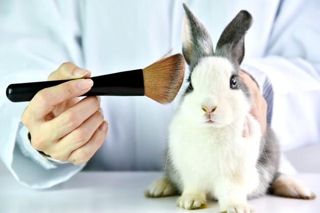 Décret sur l'expérimentation animale : les particuliers ont-ils le droit de vendre leurs animaux de compagnie aux laboratoires ?