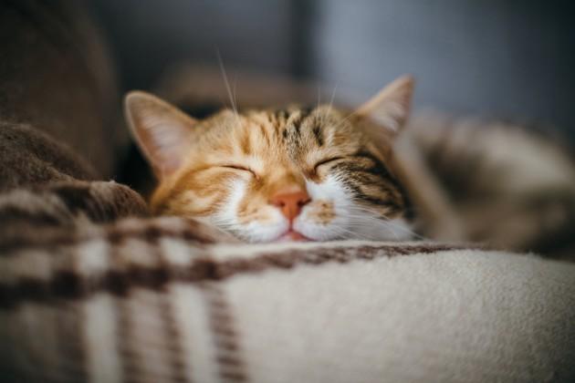Municipales 2020 : un chat se porte candidat sur une liste de La France Insoumise