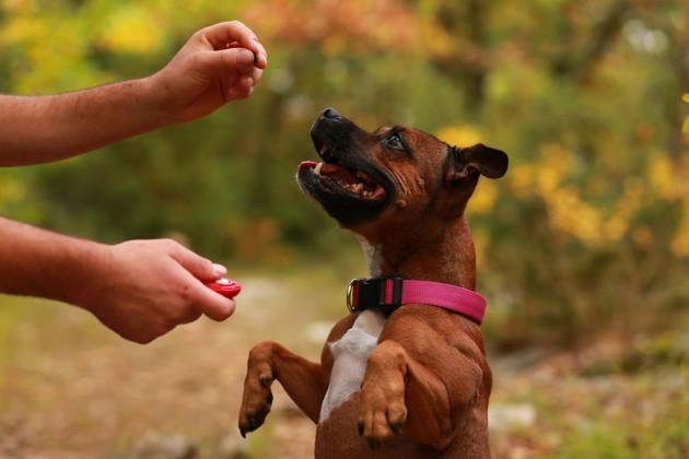 Comment bien choisir son éducateur canin ?