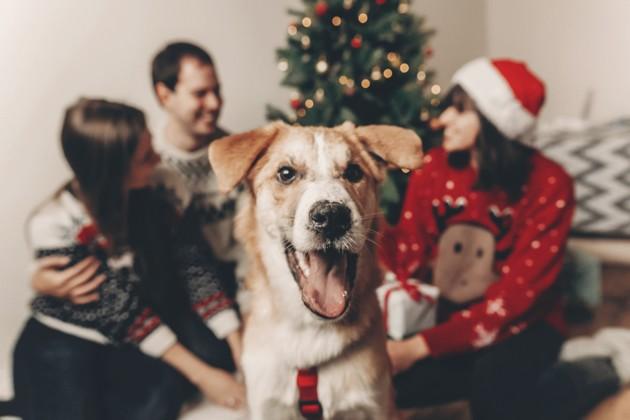 chien qui fête Noël en famille