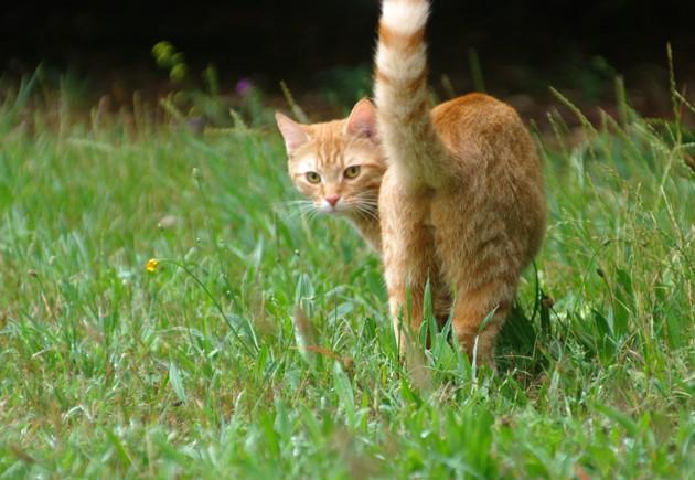 Mon chat a des gaz : pourquoi et que faire ?