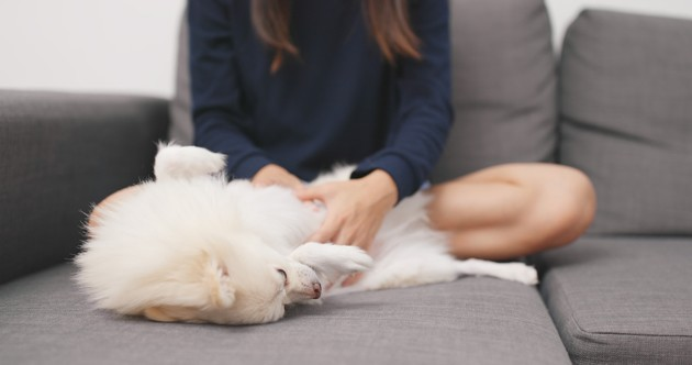 massage canin t touch