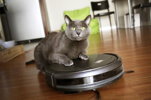 Allergies aux chats : les astuces pour bien nettoyer sa maison