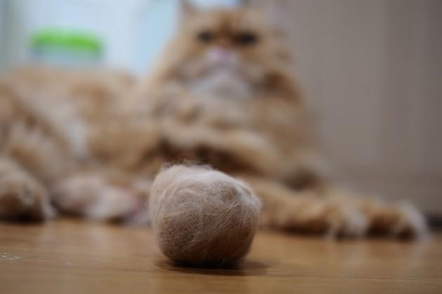 Quels sont les signes à surveiller chez le chat malade ?