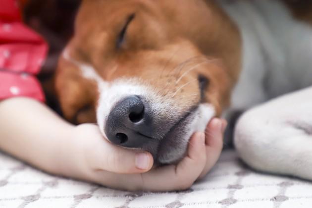 chien malade allongé