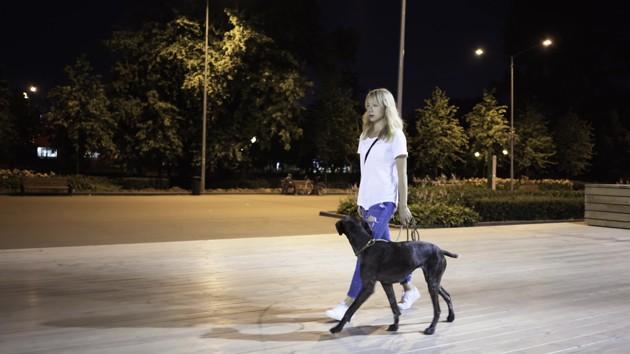 Comment promener son chien la nuit en toute sécurité ?