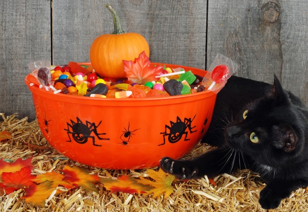 chat bonbons halloween