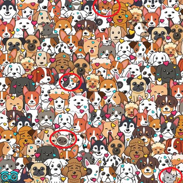Parviendrez-vous à trouver 4 chats cachés parmi les chiens en moins de 5 secondes ?