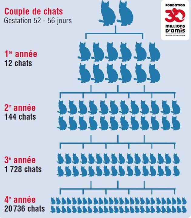 Population féline errante à Marseille : comment cette ville s'est-elle retrouvée avec plus de 5000 chats errants ?