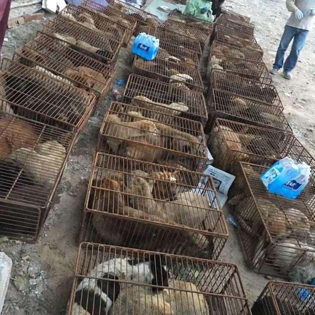 Chine : ce chien fait de nouveau confiance à l'homme après avoir survécu à un festival de la viande