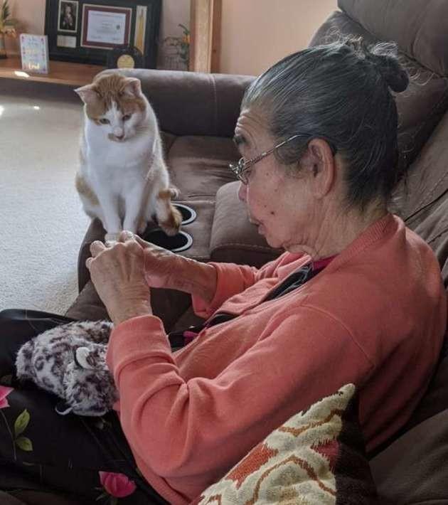 Le chat suit sa grand-mère partout et ne quitte pas des yeux ce qu'elle tient dans les mains