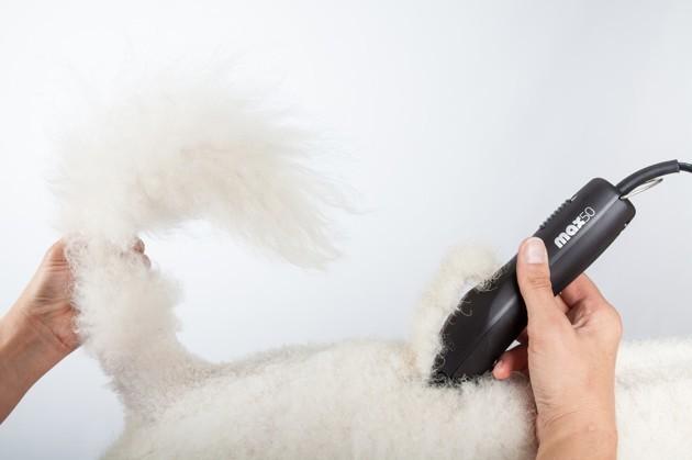 5 conseils indispensables pour apprendre à toiletter son animal à domicile