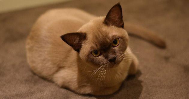 Pour Bernard Werber, auteur de La Planète des Chats, « le chat a une capacité magique à apaiser l'homme » !
