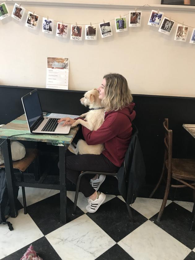 Une journée au Waf Café, le premier café à chiens d'Europe !
