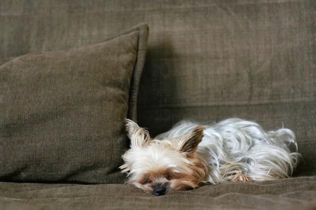 Arthrose du chien : Quelles différences avec les rhumatismes et l'arthrite ?