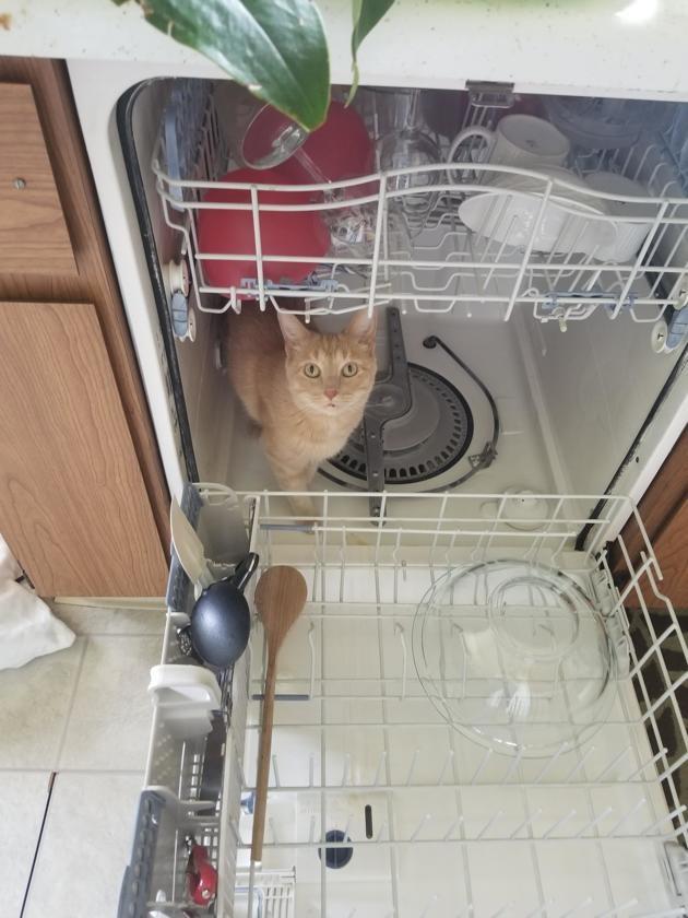 Son chat se cache constamment dans des endroits interdits : elle partage les photos avec le monde entier