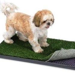 sondage toilettes pour chien d 39 appartement forum entretenir son chien wamiz