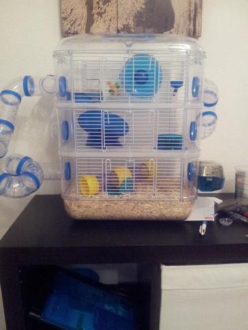 rongeurs hamster  forum quel abreuvoir pour une cage entierement en plastique