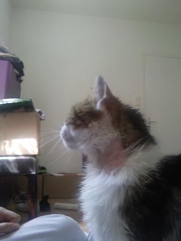 ma chatte a deux gros trous sans poils de chaque cot du cou question soigner son chat wamiz. Black Bedroom Furniture Sets. Home Design Ideas