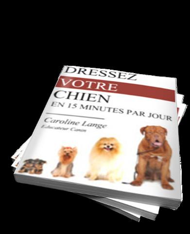 Corriger les mauvaises habitudes de votre chien 2 - Forum