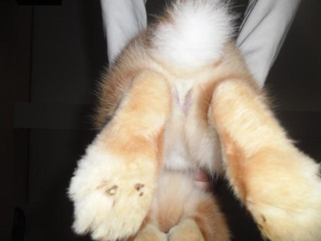 Tigrou a quelque chose coll aux pattes forum lapin - Pinceau patte de lapin ...
