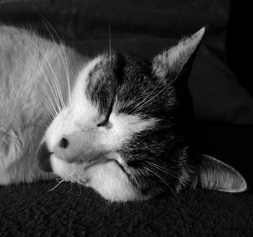 peut on laver un chaton qui a des puces 28 images 201. Black Bedroom Furniture Sets. Home Design Ideas