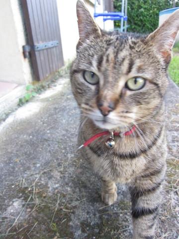 Combien de temps un chat peut il s 39 loigner de chez lui question comprendre son chat wamiz - Combien de temps un chat peut disparaitre ...