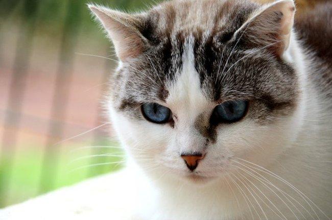 Comment se comporter pour apprivoiser une chatte tr s - Comment porter plainte pour abus de confiance ...
