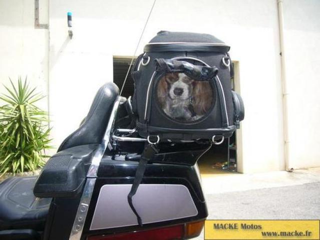 motard e s et chiens motards sur wamiz forum voyager et jouer avec son chien page 2 wamiz. Black Bedroom Furniture Sets. Home Design Ideas
