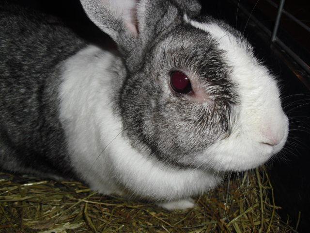 Comment reconnatre un lapin malade et dterminer l
