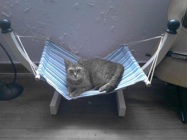 hamac pour chat forum chats wamiz. Black Bedroom Furniture Sets. Home Design Ideas