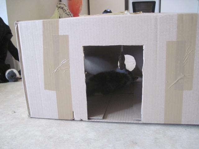 conseil pour construire une cabane pour chat forum pratique wamiz. Black Bedroom Furniture Sets. Home Design Ideas