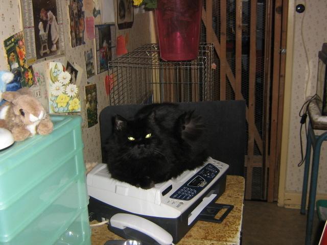 mon chat est un voleur que faire question eduquer son chat wamiz. Black Bedroom Furniture Sets. Home Design Ideas
