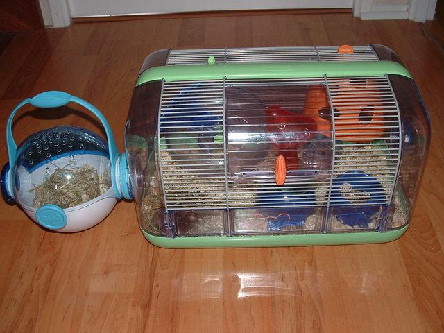 urgent donne 2 souris cage aliment forum souris souris. Black Bedroom Furniture Sets. Home Design Ideas