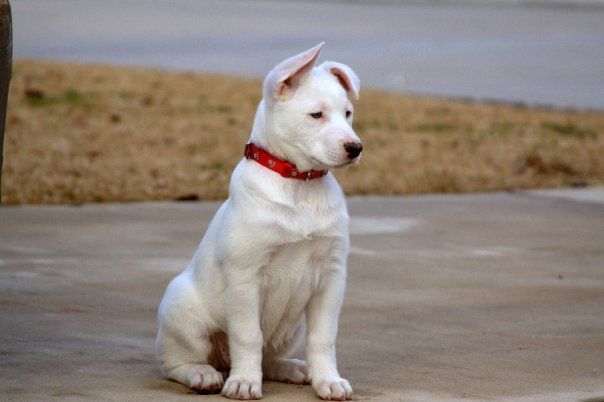 Quel est la race de mon chien - Forum Chiens - Page 3 - Wamiz