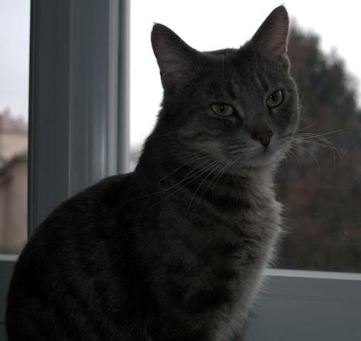 Yaourts forum nourrir son chat goutti re wamiz - Bruit qui attire les chats ...