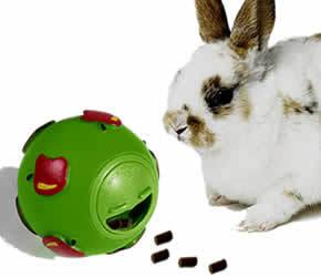 Quels jouets disposer dans un parc pour cochons d 39 inde question cochon d 39 inde wamiz - Jeux pour lapin a fabriquer ...