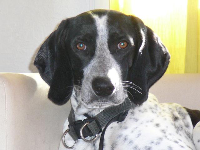Pourquoi sauver des chiens de refuges forum chiens wamiz - Je suis absente du bureau ...