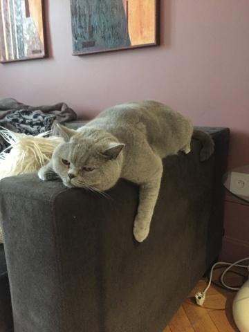 comment g rer les agressions de mon chat question eduquer son chien wamiz. Black Bedroom Furniture Sets. Home Design Ideas