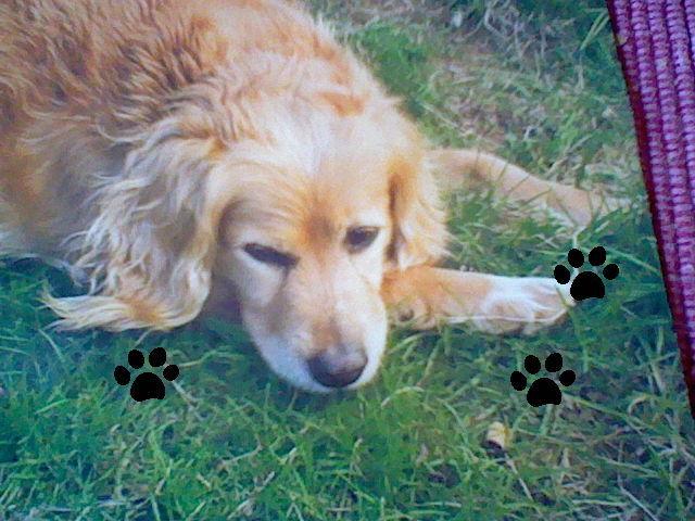 comment me remettre de la mort de mon chien je souffre tellement question soigner son chien. Black Bedroom Furniture Sets. Home Design Ideas