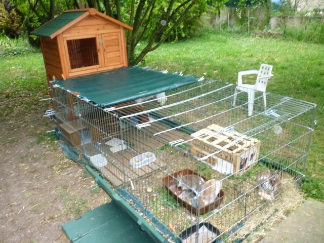 Enclos ext rieur pour mes lapins nains forum rongeurs for Cage a lapin exterieur