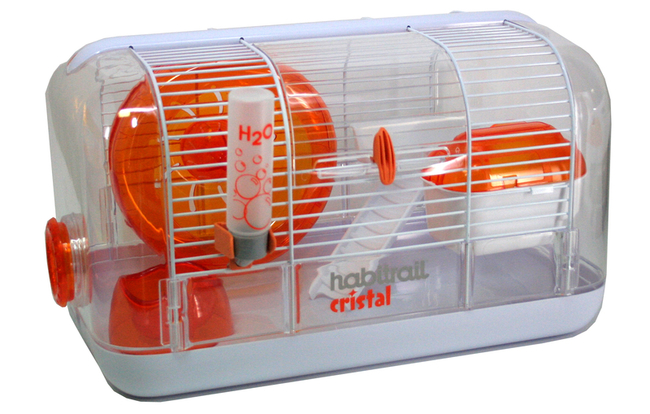 rongeurs question quelle cage pour un hamster russe
