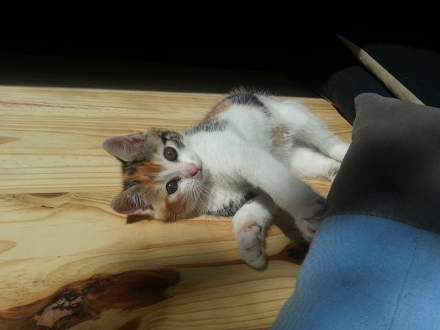 Mon chaton fait parfois pipi hors de sa liti re que faire question eduquer son chat wamiz - Mon chat fait pipi dans mon lit ...